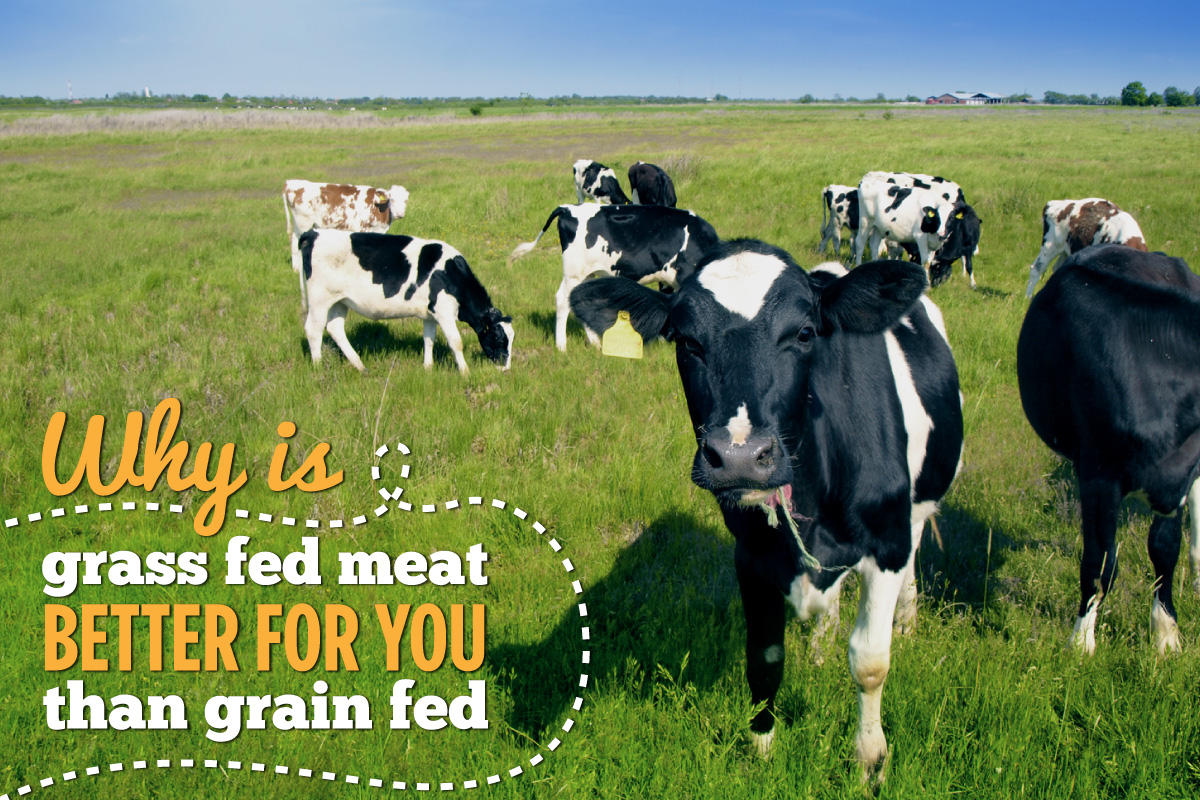 why-is-grass-fed-meat-better-for-you-than-grain-fed-header