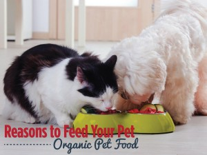 Reasons to Feed Your Pet Organic Pet Food