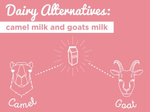 Dairy Alternatives: Camel Milk & Goat Milk