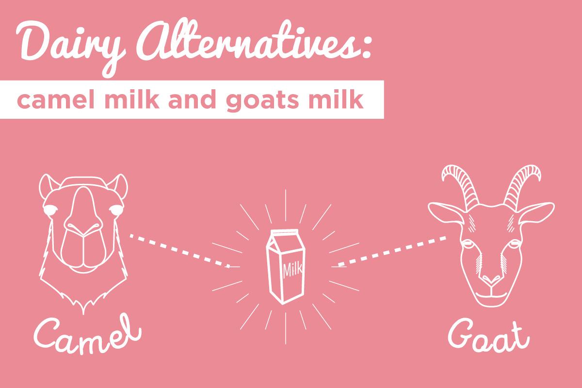 milk-alternatives-header-02