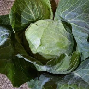Cabbage Green Med (ea)