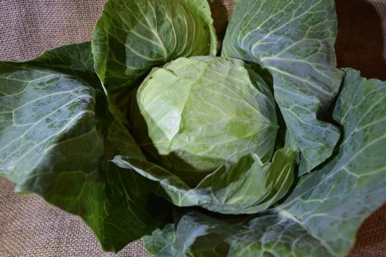 Cabbage Green Med (ea)