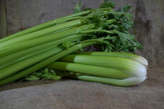 Celery Med (Bch)