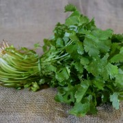Herbs ... Coriander (BCH)