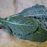 Kale Cavelo Nero (Bch)
