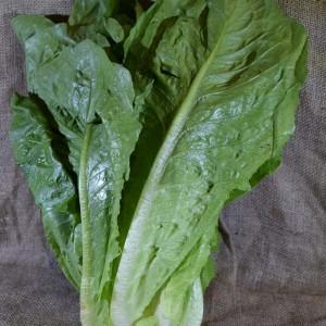 Lettuce COS (ea)