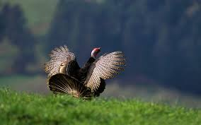 Organic Turkey – what's so good about it?